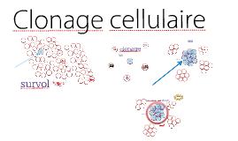 Clonage cellulaire