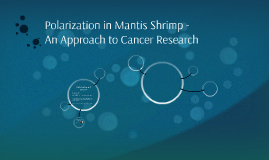Polarization in Mantis Shrimp - An Approach to Cancer Resear