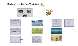 Endangered Turtles/Tortoises