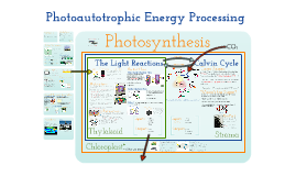 Copy of AP Bio- Energy 2:  Photoautotrophic Nutrition