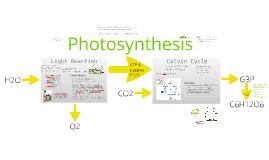 Copy of BI 2: Photosynthesis