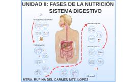 Unidad II:Fases de la Nutrición-Fisioterapia- Sistema digestivo