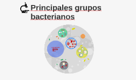Ples grupos bacterianos