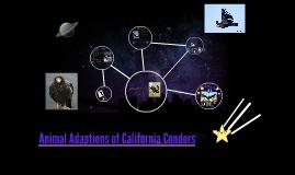 Animal Adaptions of California Condors