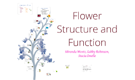 Copy of Flower Structure and Function
