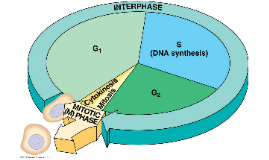 Cell Cycle Project Template
