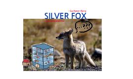 Ga Hyeon Silver Fox