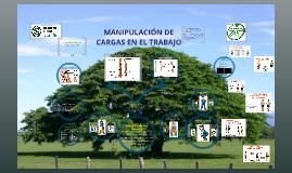 Copy of Copy of Ergonomía en el Trabajo