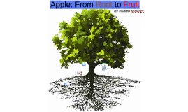 Apple - From Root to Fruit