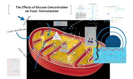 Copy of Cellular Respiration