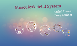 Copy of Musculoskeletal System
