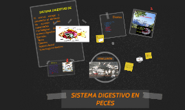 Copy of SISTEMA DIGESTIVO EN PECES