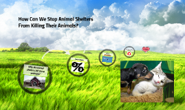 How Can We Stop Animal Shelters From Killing There Animals?