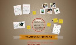 PLANTAS MUSICALES