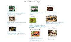 Amphibians of Isle Royale