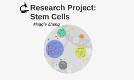 Research Project: Stem Cells