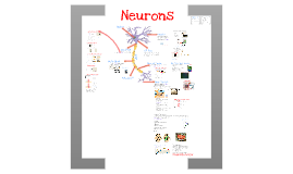 Neurons and the Nervous System