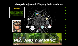 Copy of Plátano  Y Banano