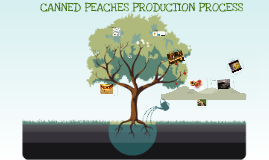 Canned Peaches Production Process