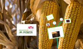 Pioneer Hi-Bred SHOW AND SHARE