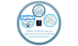 The impact of different types of physical activity on the skeletal and muscular systems