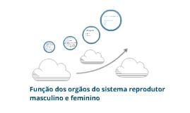 Funções dos órgãos do sistema reprodutor masculino e feminino