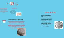 Copy of Anatomia del aparato reproductor de la yegua
