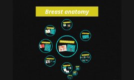 Copy of Breast anatomy