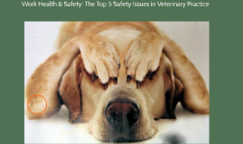 Work Health & Safety: The Top 5 Safety Issues in Veterinary