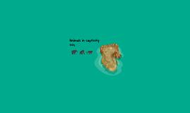 Copy of Zoo: Jackson Oz
