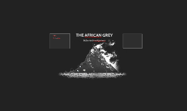 THE AFRICAN GREY