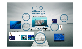 Science Project whale shark