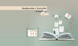 Reabsorción y Secreción fisio renal 2