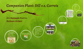 Companion Plant: Dill v.s. Carrots