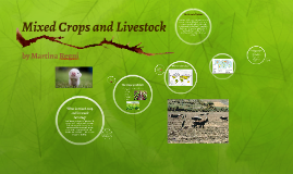 Copy of What is mixed crop and livestock farming?