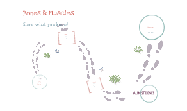 Bones/Muscules Quiz