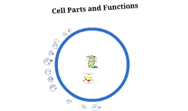 Cell Parts and Funcitons