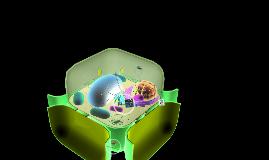 1period Danell whetstine Cells