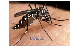 Dengue, epidemiologia clinica - Chile