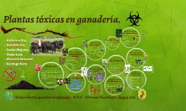 Plantas tóxicas en ganadería.