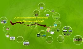Copy of ¿Con que ecosistemas convivimos en las Marismas del Odiel?