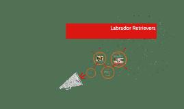Labrador Retrivers