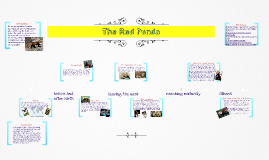 Copy of The life cycle of a Red Panda