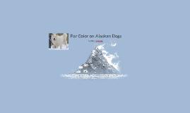 Alaskan Dogs