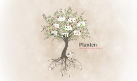 Planten OB