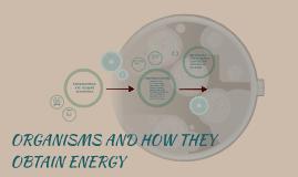ORGANISMS AND HOW THEY OBTAIN ENERGY