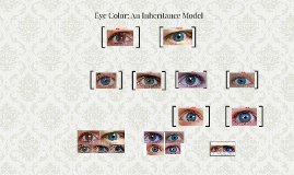 Copy of Copy of Eye Color: An Inheritance Model