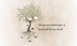 Steps to cultivate a bonsai from seed