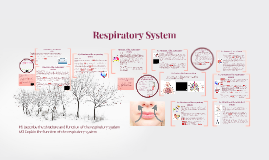 Assignment 4:Respiratory System