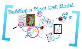Building a Plant Cell Model